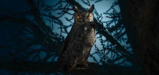 Owl Sound at Night | www.FreeSoundsLibrary.com