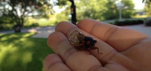Cicadas Noise | www.FreeSoundsLibrary.com