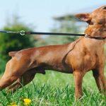 Nervous Dog Barking Sound Effect