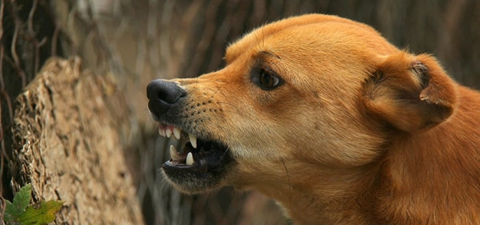 Angry dog barking sound mp3 download