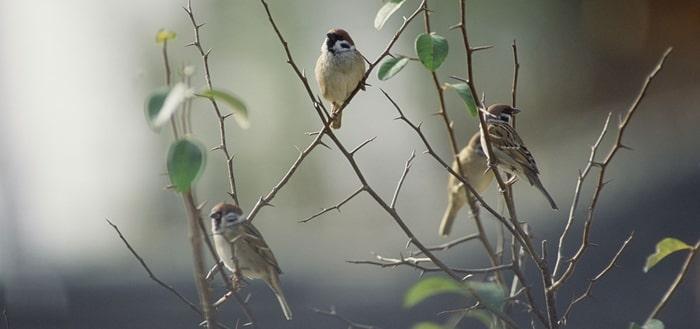 Birds Chirping Sound