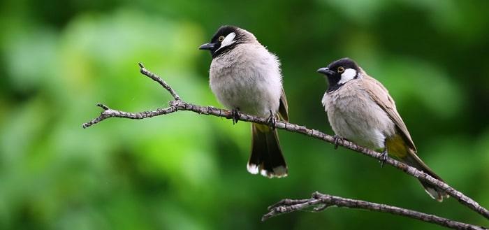 Birds Chirping 4am