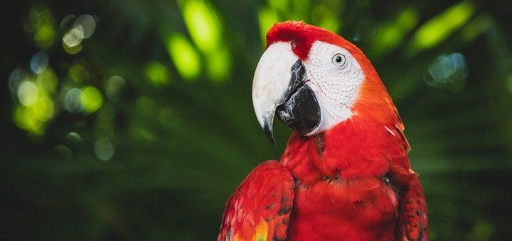 Parrot Sound