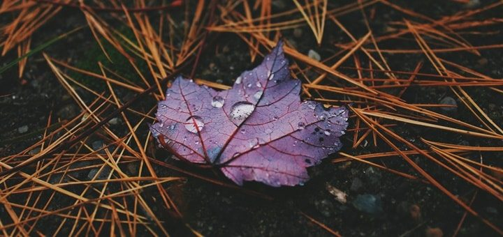 Close Thunder with Rain