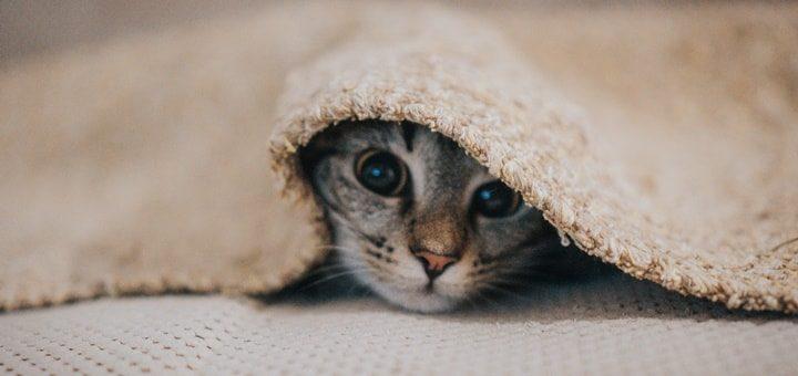 Kitten Sound