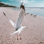 Seagull Beach Sound Effect