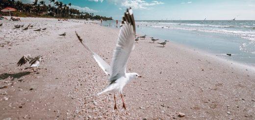 Seagull Beach Sound Effect