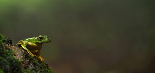 Tree Frog Sound