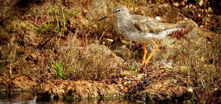 Water Birds Sounds