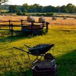 Farm Ambience SFX