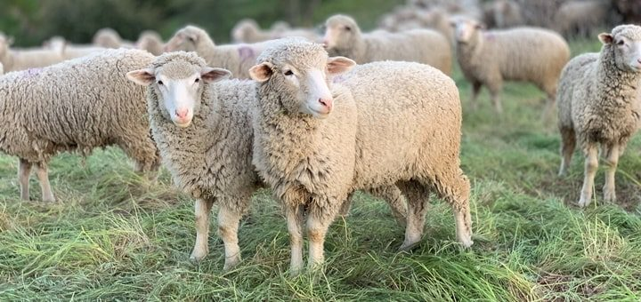 farm animal sounds mp3 free download