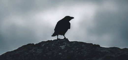 Crow Caw Sound