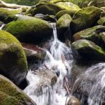 Small Forest Stream