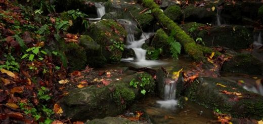 Small Water Stream in Forest