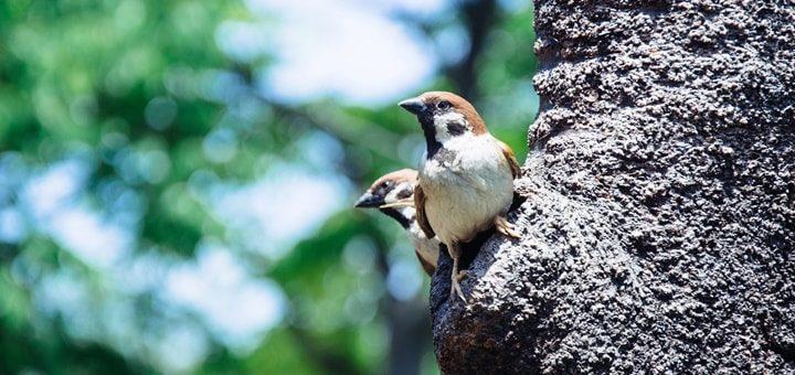 Beautiful Birds Singing