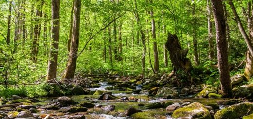 Stream and Bird Sounds for Relaxation