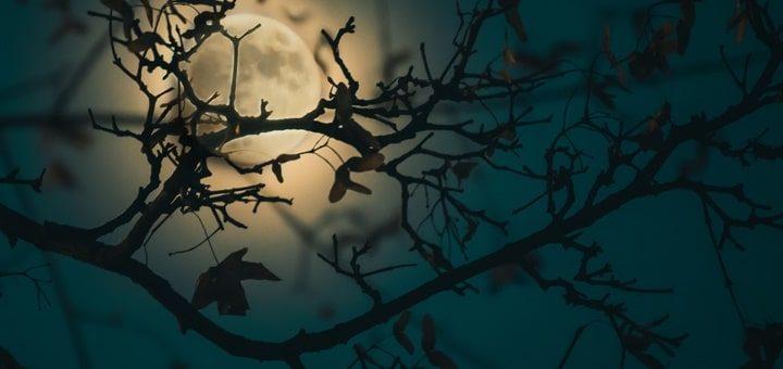 Night Bird Sounds