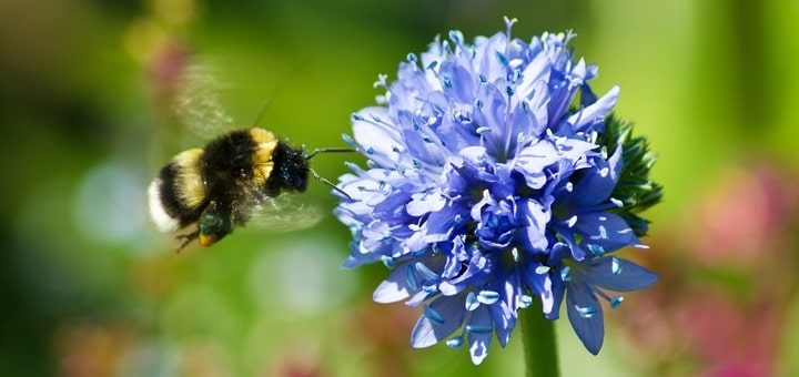 Bumblebee Sound