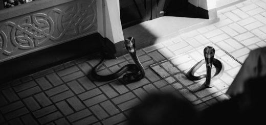 Snake Hissing Sound