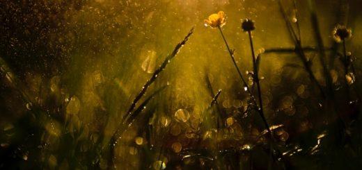 Light Rain Sound Effect Audio Loop
