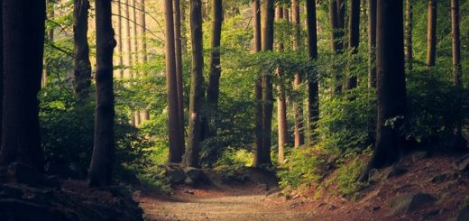 Forest Birds Sound Effect Relaxing Nature Ambience