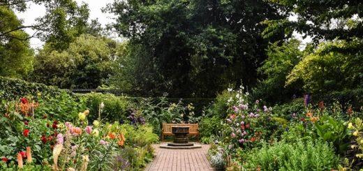 Bird Chirping in the Garden Sound Effect